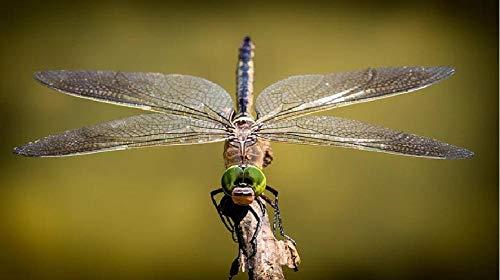 Libelle vleugel insecten natuurschilderij op nummer, DIY uniek