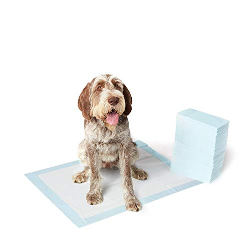 AmazonBasics Dog and Puppy Pee, Potty Training Pads, X-Large (28 x 34 Inches) - Pack of 40