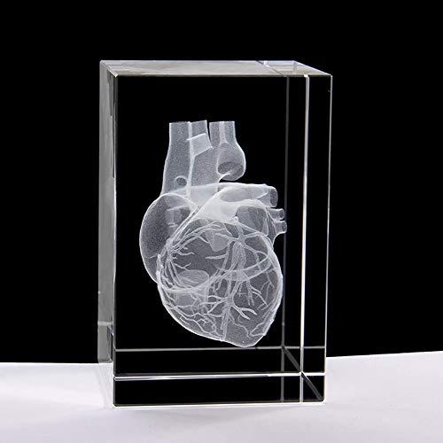 JJIIEE Modelo de corazón 3D, corazón Humano de Cristal con arteria coronaria, pisapapeles (Grabado con láser) en un Cubo de Cristal, Regalo de Ciencia, decoración de Escritorio (3.9x2.4x2.4 Pulgadas)