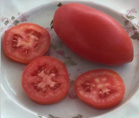 5 paquets de 25 graines Big Italian Plum - Graines de tomate