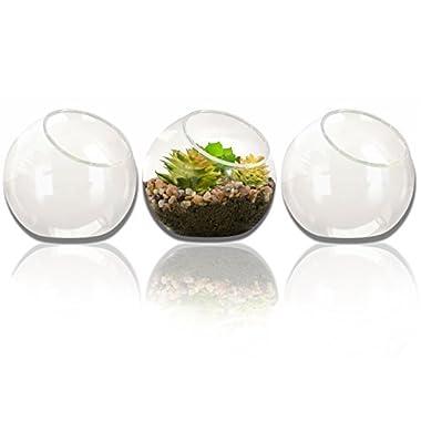 NeutralPure ECO Tabletop Glass Plant Terrarium (3 Pcs)