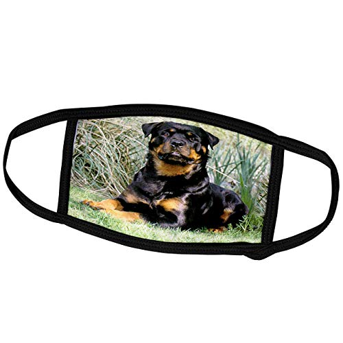 Promini Monatsmaske - Hunde Rottweiler - Rottweiler - Staubmaske Outdoor Schutzmaske