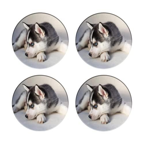 Posavasos para Bebidas,Husky Siberiano Triste Cachorro Pequeño Perro Lindo Animales Bonitos Vida,Manteles Individuales Redondos Reutilizables para la decoración de la Barra de Cocina