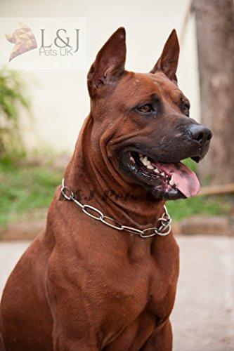 Champion Collier de dressage pour chien en métal argenté résistant 67 cm