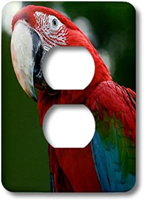Costa Rica Sa22 Rsp0031 Rob Sheppard Single Toggle Switch Rainforest 3dRose lsp/_87272/_1 Scarlet Macaw Bird