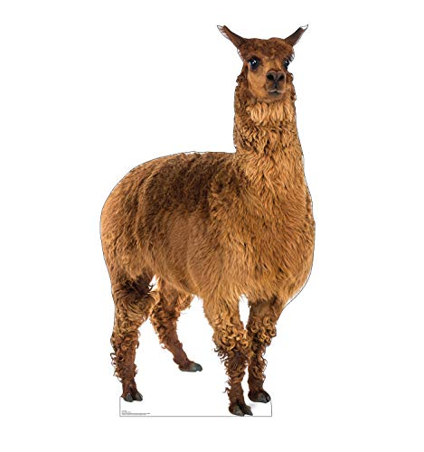 Advanced Graphics Llama Life Size Cardboard Cutout Standup