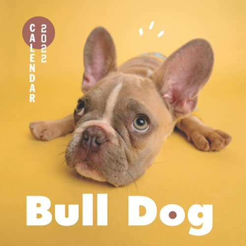 Bulldog 2022 Calendar: From January 2022 to December 2022 - Square Mini Calendar 7x7' - Small Gorgeous Non-Glossy Paper