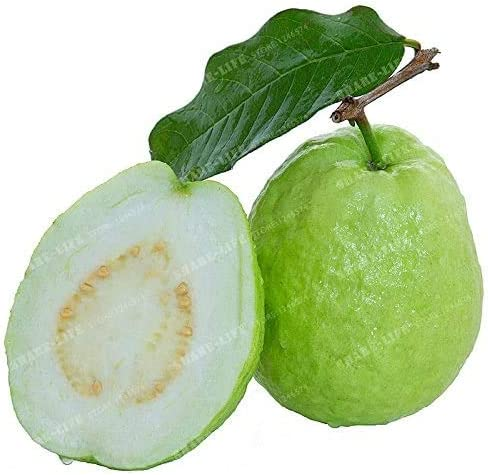 100 Pcs Bag Guava Seed Vegetable Psidium Seeds Fruit Sale item Guajava 2021new shipping free shipping Bon