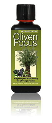 Dünger Oliven Focus 300ml Flüssigdünger Konzentrat Olivenbaum Olive