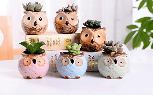 APHACATOP Set di 6 mini vasi in ceramica per piante grasse cactus, a forma di gufo, con foro