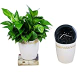 Huamilay 2 Pack Self Watering Planter Automatic Watering White Flower Pot for Lazy Person to Plant Green Plants African Violet, L
