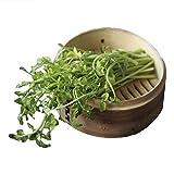 [ 山菜 ] セリ苗 3.5寸ポット