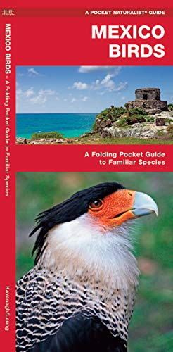 Mexico Birds: A Folding Pocket Guide to Familiar Species (A Pocket Naturalist Guide)