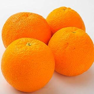 南国フルーツ アメリカ産オレンジ  10玉(1玉200g)