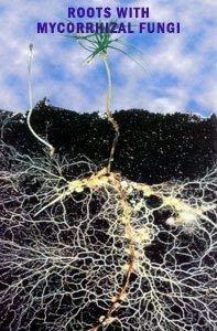 Big Foot Organic Mycorrhizal Inoculant