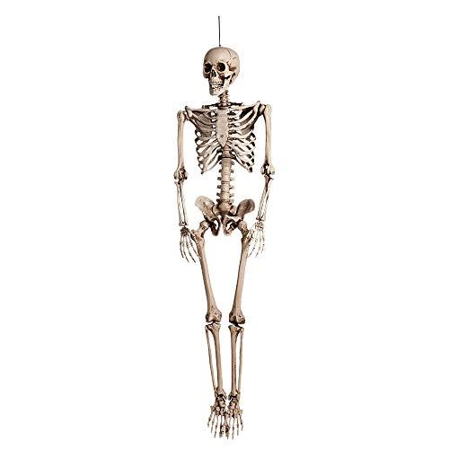 Squelette taille réelle articulé 160 cm à suspendre Belle qualité [74515]