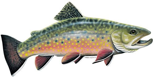 Saber-Tooth Co Brook Trout Decal/sticker - Freshwater Fish Collection - Small 6.5 X 3 Facing As Shown