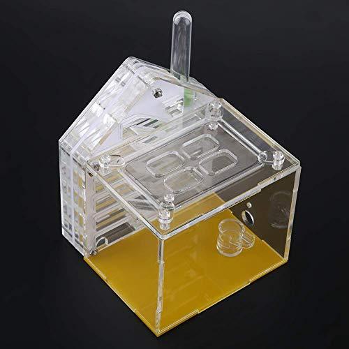 Duokon Ameisennest Ameisenfarm Acrylbauernhof Insekten Käfig Anzeigen-quadratischer Kasten für die Ameisen-Fütterung