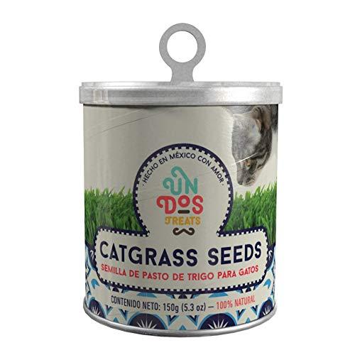 Cat Grass Seeds Pasto De Trigo Para Gatos