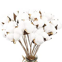 "Material: natural cotton shell, artificial cotton, iron wire. Package contains: 20pcs cotton stems. Size: The diameter of the cotton head is about 2""-2.5"", and the length of the branches is about 16"". Can be used for illustrations, DIY crafts, home d..."