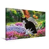 Calvendo Premium Textil-Leinwand 75 cm x 50 cm Quer, Katze in Einer bunt blühenden Gartenidylle | Wandbild, Bild auf Keilrahmen, Fertigbild auf Echter die Letzten Sonnenstrahlen Tiere Tiere