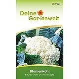 Blumenkohl Erfurt Samen - Brassica oleracea - Blumenkohlsamen - Gemüsesamen - Saatgut