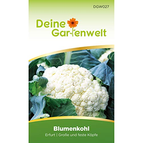 Blumenkohl Erfurt Blumenkohlsamen | Samen für Kohl | Kohlsamen | Saatgut