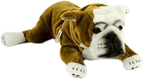 Teddys Rothenburg K n, Englische Bulldogge, 46cm, liegend, braun Weiß Plüschbulldogge