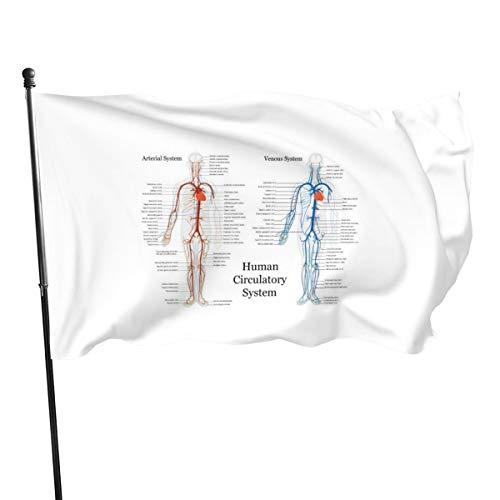 N/D Sistema circulatorio humano de arterias y venas banderas