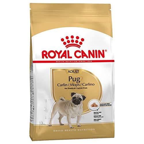 Royal Canin Mops Adult Trockenfutter für Hunde, 3 kg, 3 Stück