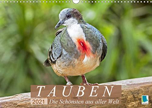 Tauben: die Schönsten aus aller Welt (Wandkalender 2021 DIN A3 quer)