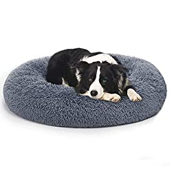 Border Collie laying on a blue shag donut cuddle bed.