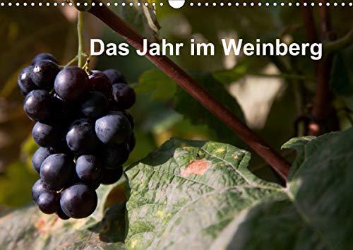 Das Jahr im Weinberg (Wandkalender 2021 DIN A3 quer)