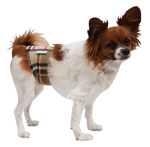 Incontinent - Washable Male Dog Belly Band Diapers by Coddled Canine