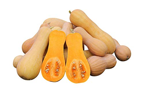 Courge Waldham Butternut 10 graines
