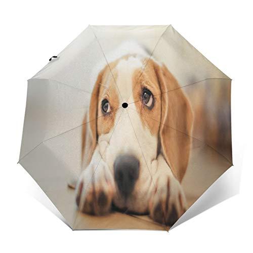 SUHETI Paraguas automático de Apertura/Cierre,Lindo Perrito tirado en el Suelo,Paraguas pequeño Plegable a Prueba de Viento