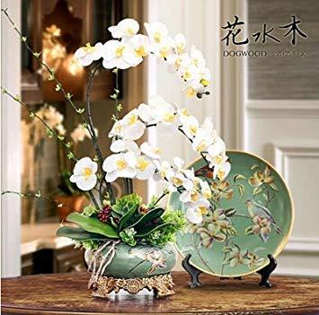 Fleur exotique Orchidée Graines Cattleya Multicolor Papillon Orchidee Bonsai Monoflord Mini jardin plante facile à cultiver 200 pcs/sac 18
