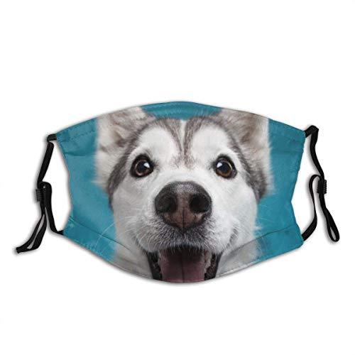 Bandana para la cara, un dulce Alaskan Malamute sobre un fondo azul, unisex, reutilizable, resistente al viento, antipolvo, bandana para camping, motocicleta, correr, cuello con 2 filtros.