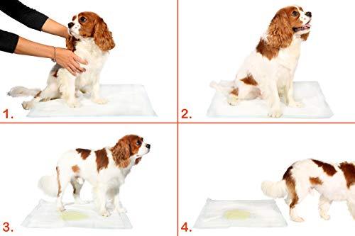 Hartz Home Protection Lavender Scented Odor Eliminating Gel Dog Pads - 50 Count