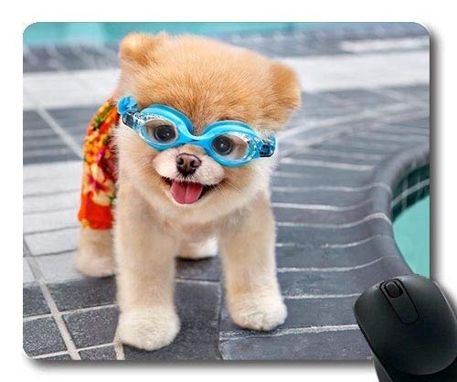 Gaming-Mauspad, Tiere Katze Kätzchen Hund Golden Husky Hund, Präzisionsnaht, langlebige Mauspad