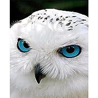 ダイヤモンド絵画5Dシロフクロウシロフクロウ鳥Diy手作りペーストフルラインストーン装飾絵画リビングルーム絵画,40*50Cm(16*20Inch)