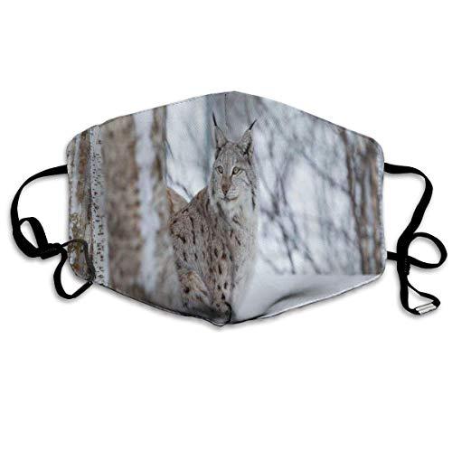 Mundschutz Atmungsaktive Gesichtsmundabdeckung Staubdichter europäischer Luchs Schneekalter Wald Norwegen Nordic Country Wildlife Apex Predator, Gesichtsdekorationen
