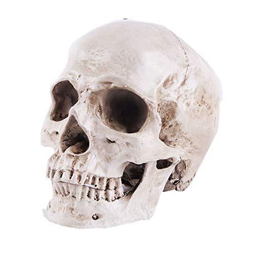 FAGavin Deko 1: 1 Menschlicher Schädel Modell Hochpräzise Lehrmittel Harz Handwerk
