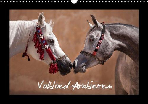 Volbloed Arabieren (B-Version) (Wandkalender 2014 DIN A3 vertikaal): De mooiste paarden uit het land van 1001 nacht. (Maandelijkse Kalender, 14 Pagina's)