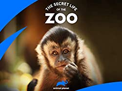 Image: Watch The Secret Life Of The Zoo | Through the use of cameras equipped with the latest technology, this program takes viewers behind the scenes of the zoo, capturing animal behavior close up, as well as the relationships the animals share with their keepers