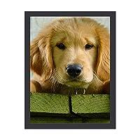 INOV ゴールデン リトリーバー 小犬 インテリア 壁掛け 額入り ポスター アート アートパネル リビング 玄関 プレゼント モダン アートフレーム おしゃれ 30x40cm