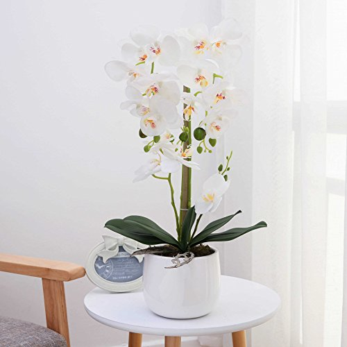 LIVILAN Large Dual Stem Silk Phalaenopsis Arrangements, Realistic Orchid in White Ceramic Vase Artificial Flower Decoration, White