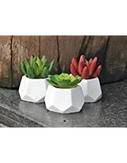 Satyam Kraft 1 Pcs Artificial Succulent with White Color Geometric Shape Designer Pot for Home Decoration for Gift Office and Book Shelf Decoration