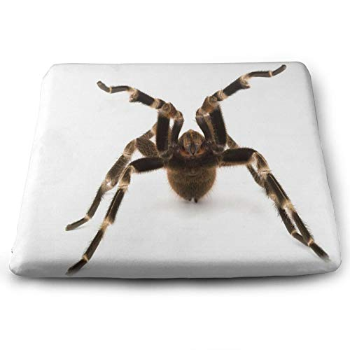 Mexican Red Rump Tarantula (Brachypelma Vagans) Cool Chair Seat Cushions Pads Memory Foam Office Dining Kitchen Soft Chair Cushion Set Of 4 for Pressure Relief, Wheelchairs, Patio, Cafe, Garden, Indoo