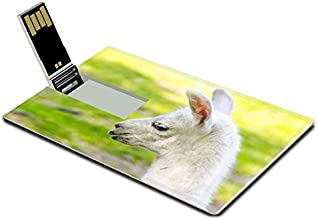 Luxlady 32GB USB Flash Drive 2.0 Memory Stick Credit Card Size Full White Llama Lama glama Baby Head Image 39791444
